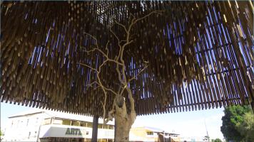 barcaldine tree of knowledge
